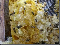 cappings