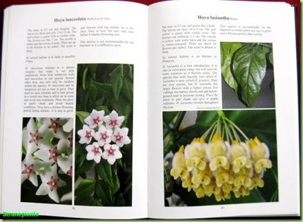 the genus hoya - pagina libro - il genere hoya