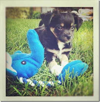kipperthedog2
