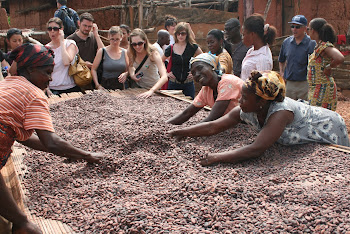 'Cocoa beans at Kuapa Kokoo Cocoa farm outside of Kumasi' Photo by Sandra Vu