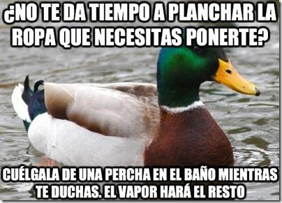 0 pato consejos cosasdivertidas info (6)