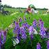 Антон Шкаринов - Отличная полянка! Отдых на цветущей полянке, Вело ПВД по маршруту Уфа-Глубое озеро-Уфа 19 июня 2011 года