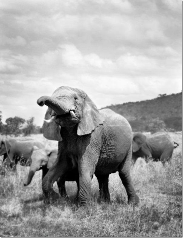 Fotos preto e branco de animais selvagens (5)