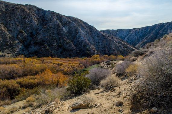 Big Morongo Canyon (7 of 63)