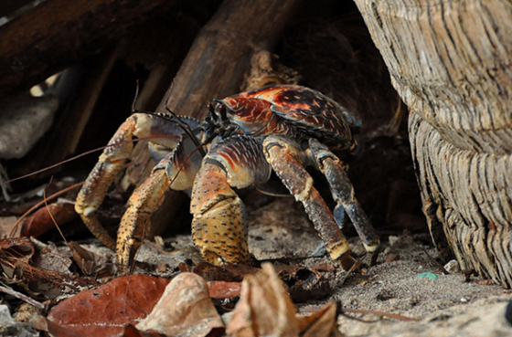crab18.img_assist_custom-600x394