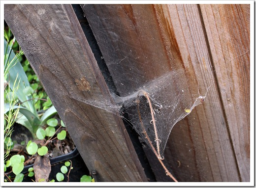 120518_spiderweb7