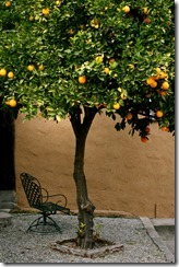 Los-Feliz-Orange-Tree-6322