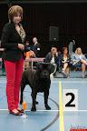 20130510-Bullmastiff-Worldcup-0630.jpg
