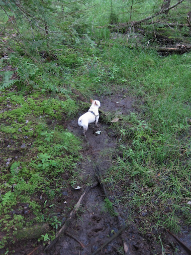 Franny, I think that this vernal pool is in the process of drying up.  It's really muddy here.