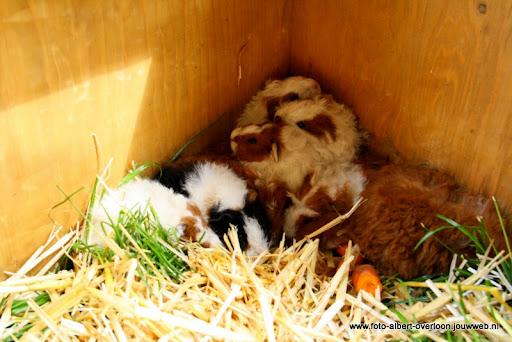 koeien kijken boer martij 18-06-2011 (5).JPG