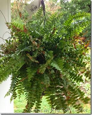 lefty fern