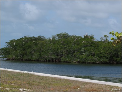 pelican roost
