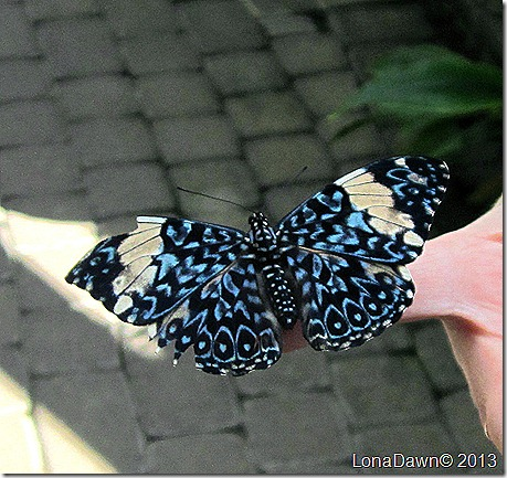 FPC_Butterfly_Blue