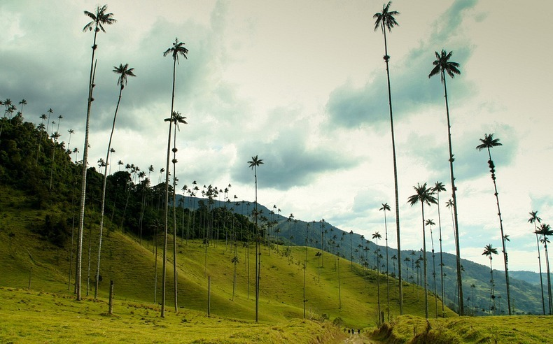 cocora-valley-3