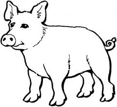animal-porco-Desenhos e Riscos para colorir