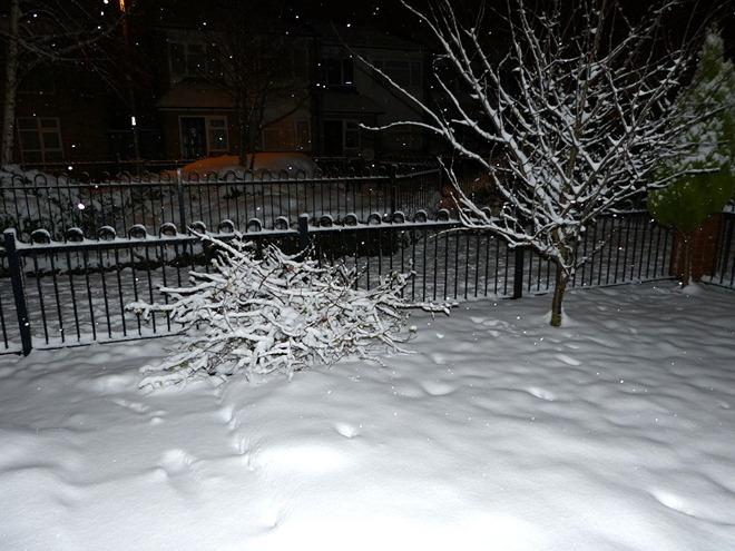 Сад в ночи со вспышкой