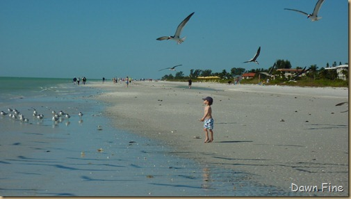 Sanibel Shell and birds_176