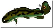 peces clipart blogcolorear (26)