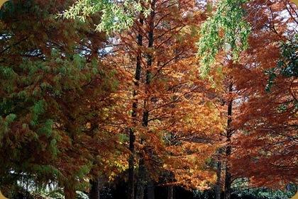 fall n callaway
