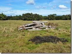 Cypress wood pile