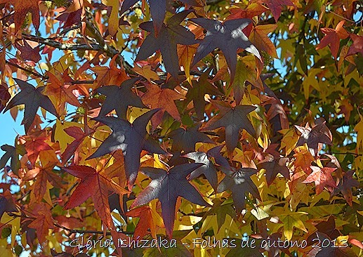 18  Glória Ishizaka - Folhas de Outono 2013