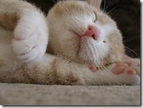 gato 34 (16)