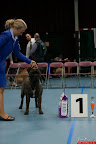 20130510-Bullmastiff-Worldcup-0351.jpg