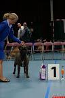 20130510-Bullmastiff-Worldcup-0351.jpg