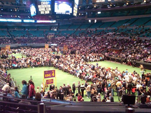 Crowds gather on the floor of Madison Square Garden, which is set up with rings for breed judging.