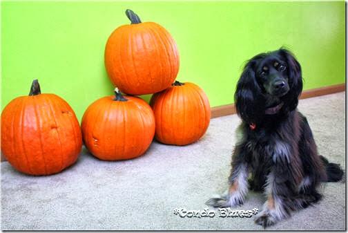 pumpkinlacey