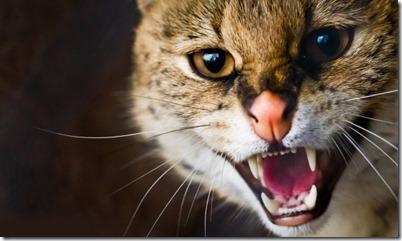 10-cose-odiano-gatti