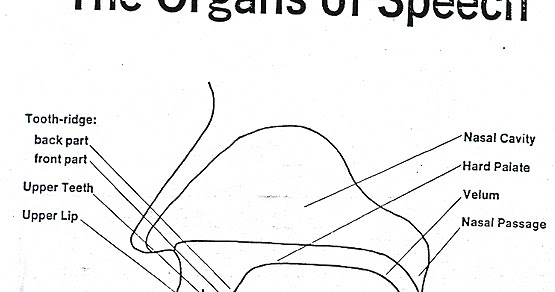 Organs of speech organs their functions teflers inn ccuart Choice Image