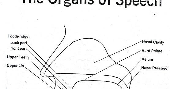 organs of speech organs  u0026 their functions