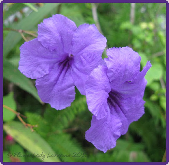 08-26-phil-violets
