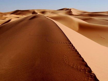 desert876s