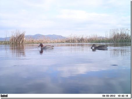 balson 2 al 5 de Abril de 2012 976