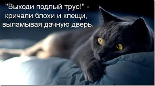 1361559338_novye-kotomatricy-23