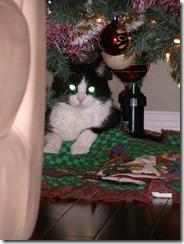 Arthur under Christmas Tree