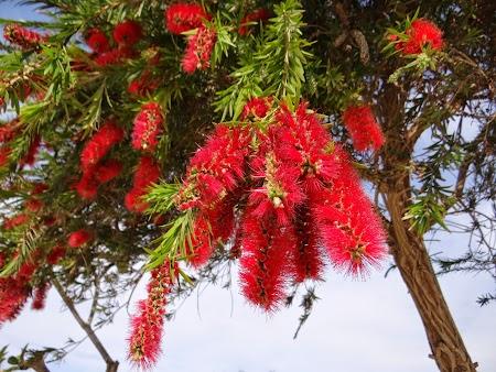 13. Flori exotice - Movenpick Tala Bay.JPG