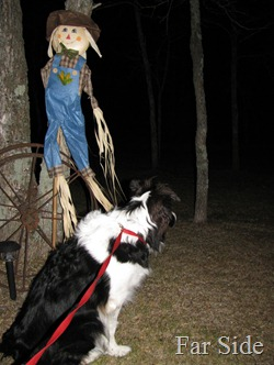 Chance and the Scarecrow