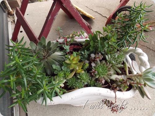 Plants 001