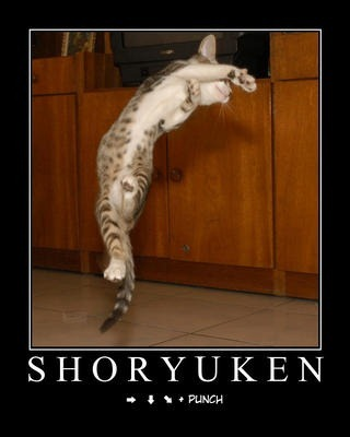 street-fighter-cat