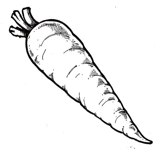 zanahoria para colorear - photo #5