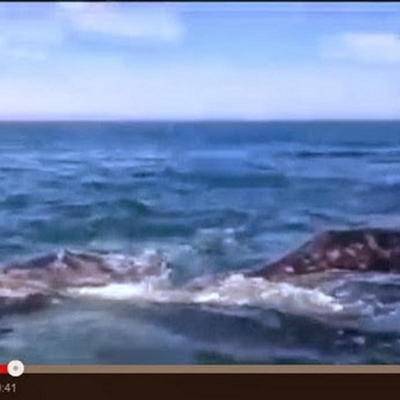 Φάλαινα χαστουκίζει ένα κορίτσι