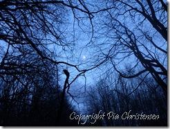 månen titter frem