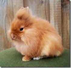L'uveite nel coniglio