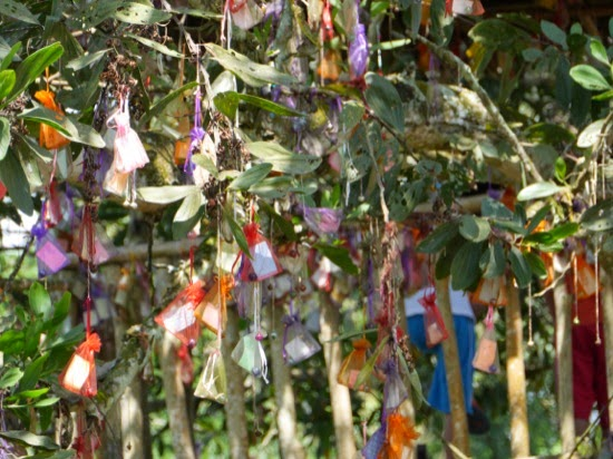 UK Farms - Wishing tree..