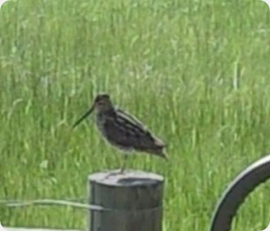 birdbeak