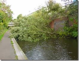 Tree clearance (3)