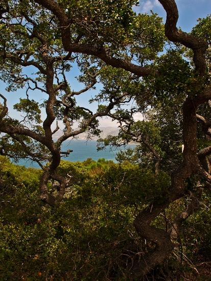 Channel Island NP Santa Cruz Island Pelican Bay Hike (2)
